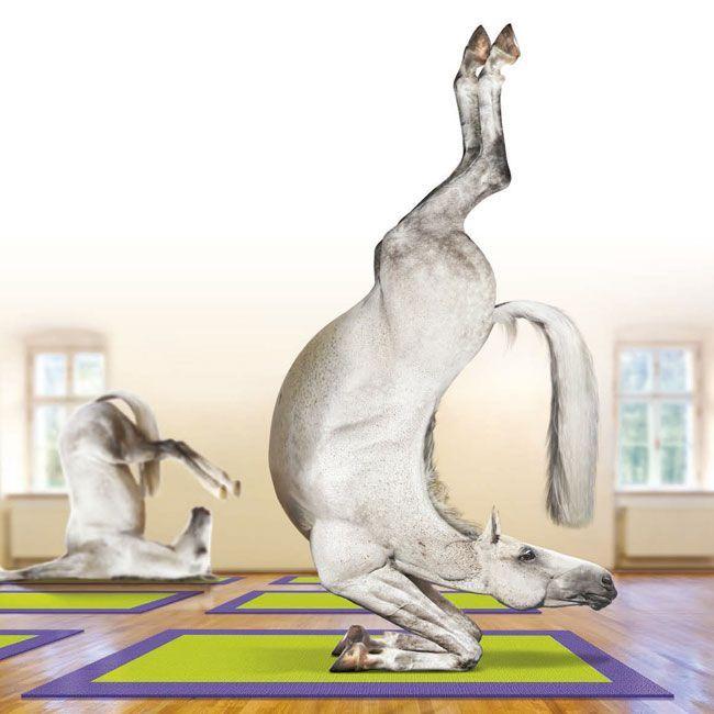 pilates horse